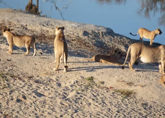 Hoedspruit, Sudáfrica