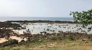 Sharks Cove