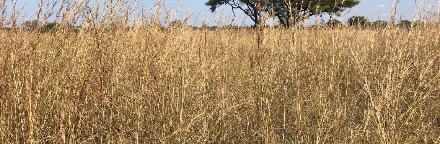 Nacionalni park South Luangwa, Zambija