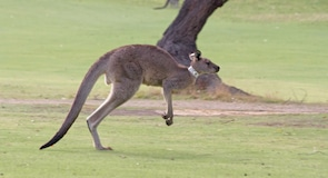 Pole golfowe Anglesea Golf Club