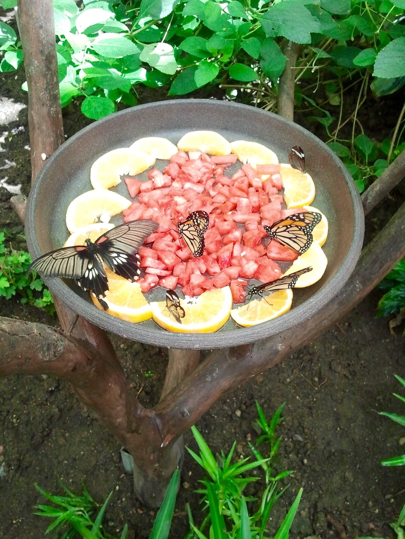 Schmetterlingspark Benalmádena, Benalmádena, Andalusien, Spanien
