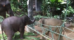 Kem Gajah Measa