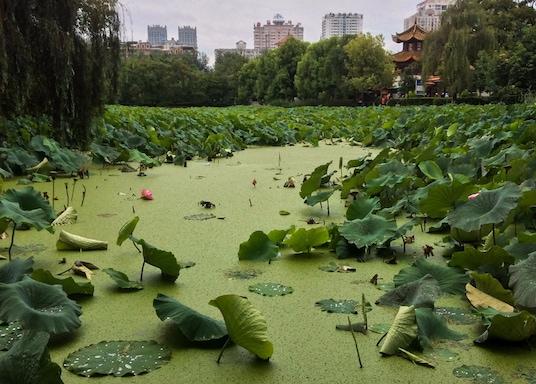 Kunming, Kína