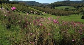 Ladang & Ladang Anggur Pippin Hill