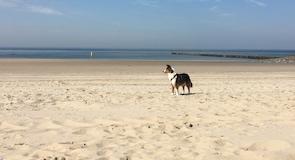 Пляж Westkapelle