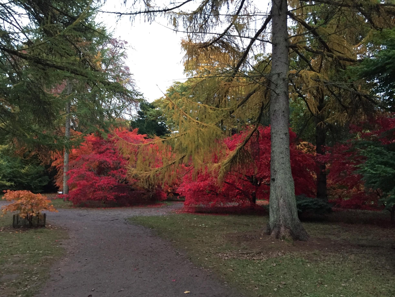 Westonbirt Arboretum, Tetbury, England, United Kingdom