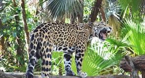 Belizas zooloģiskais dārzs