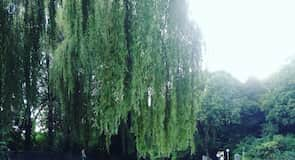 英國花園南