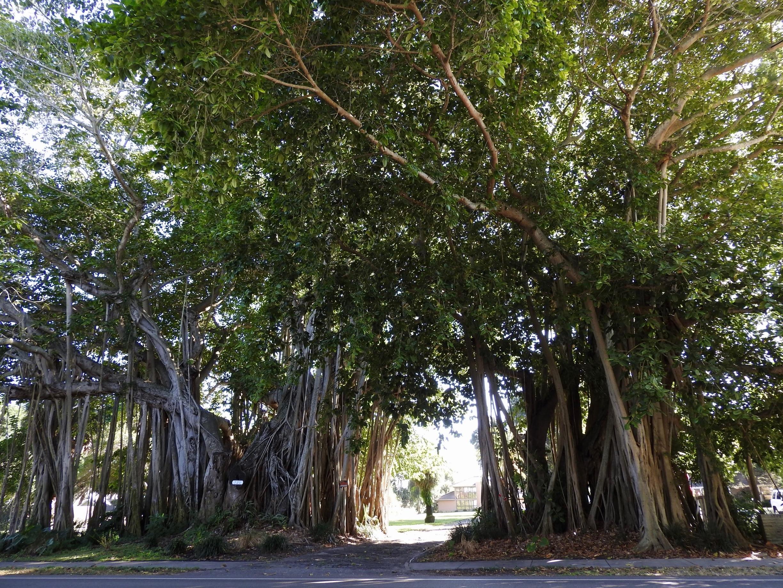 Greater Pinellas Point, São Petersburgo, Florida, Estados Unidos