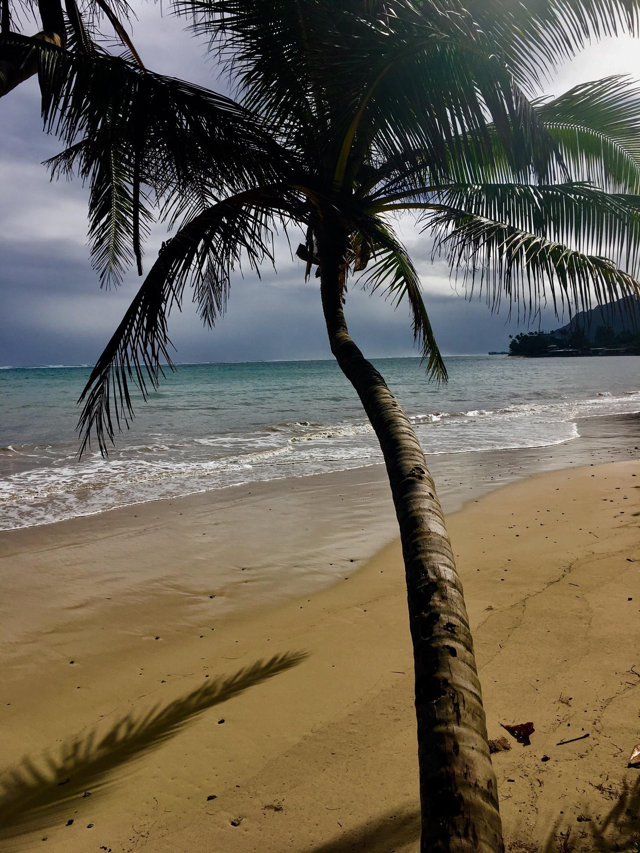 Punaluu, Hawaii, United States of America