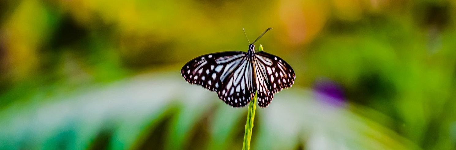 Silvassa, India