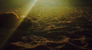 Plaża w Salisbury