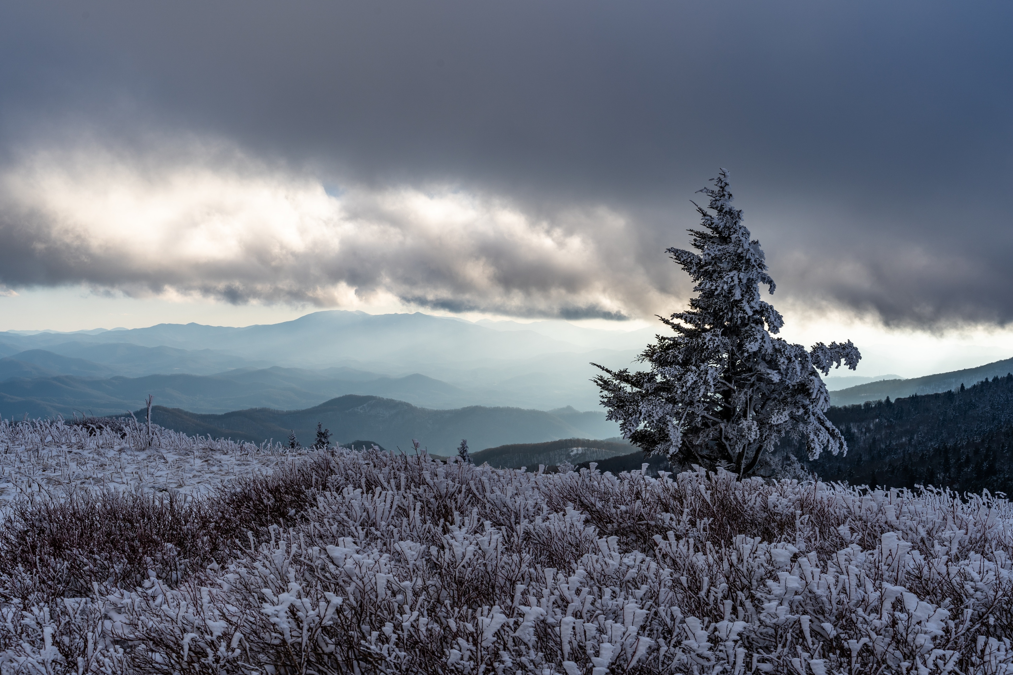 Roan Mountain, Tennessee, United States of America