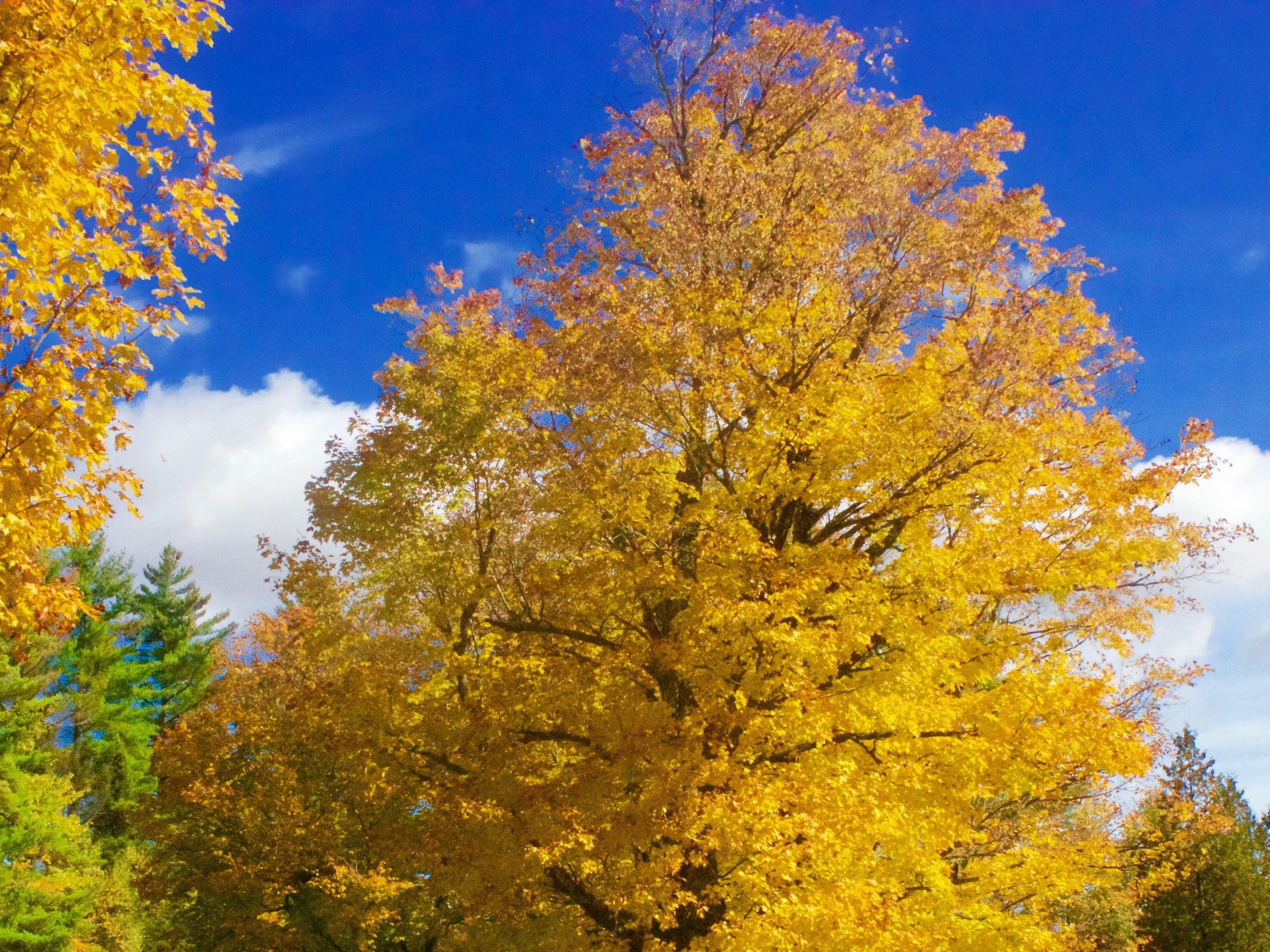 Northfield, Vermont, United States of America