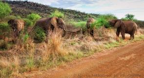 Madikwe Av Hayvanları Koruma Alanı