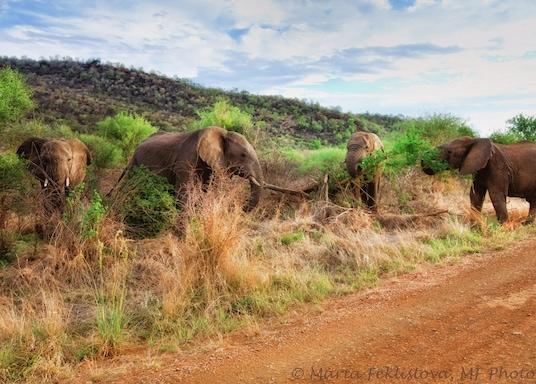 راموتشير مويلوا, جنوب أفريقيا