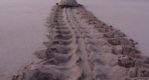 Ras al-Jinzi kilpkonnade kaitseala