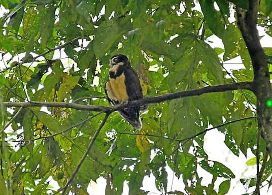 Cartago (província), Costa Rica
