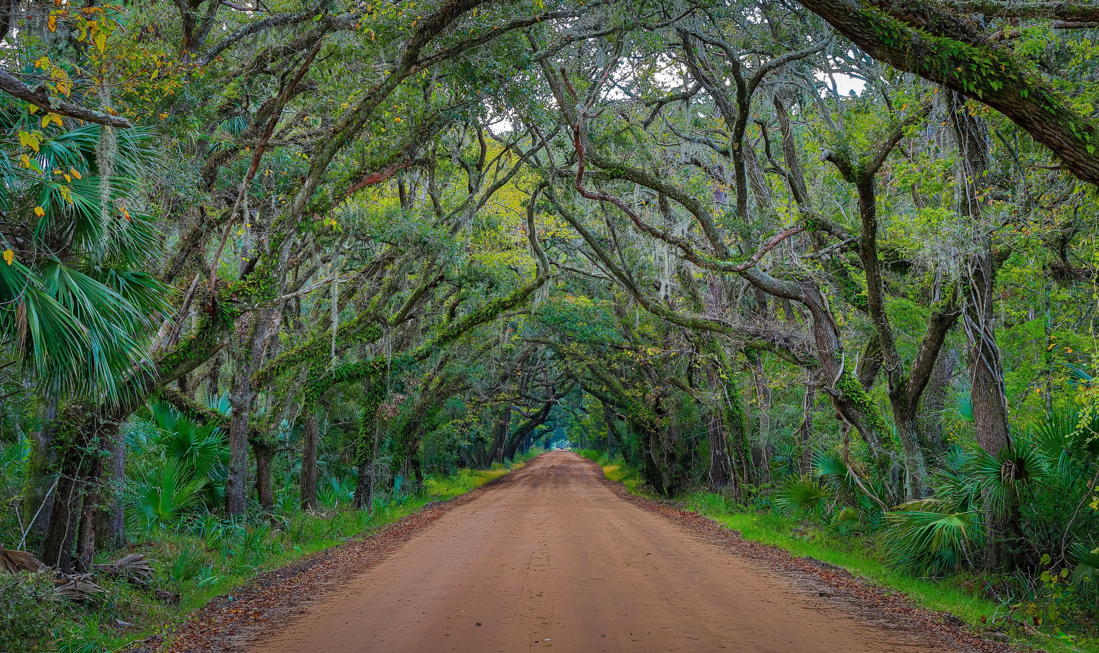 Edisto Island, South Carolina, USA