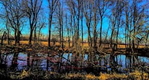 Ridgefield National Wildlife Refuge