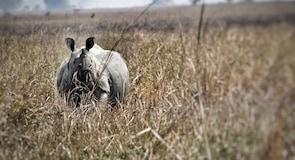 Réserve animalière Pobitora Wildlife Sanctuary
