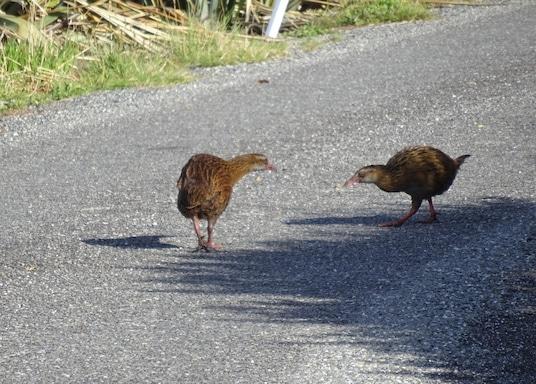 Foulwind-fok, Új-Zéland