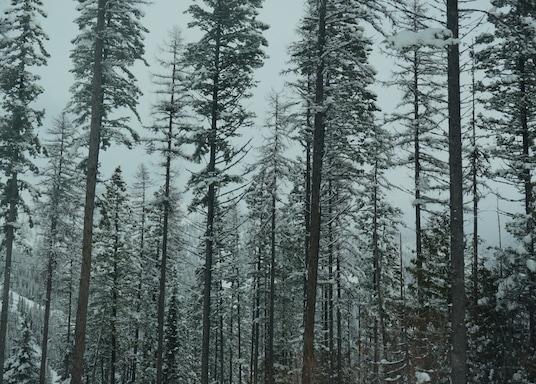懷特菲什, 蒙大拿, 美國