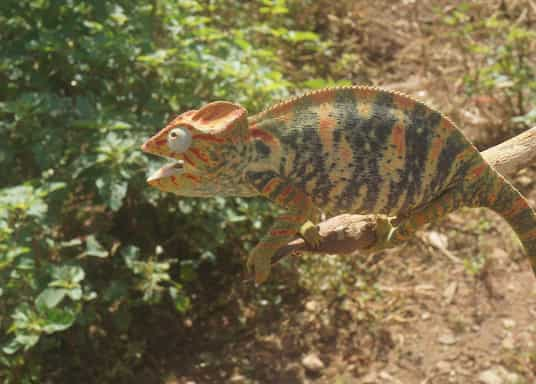 Αντσιρανάνα, Μαδαγασκάρη
