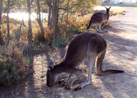 Perth, Västra Australien, Australien