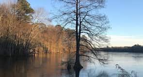 Taman Negara Trap Pond