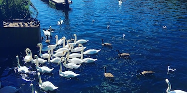 Grove, Kingston Upon Thames, England, United Kingdom