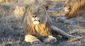 Madikwe Wildreservat