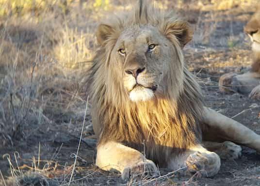 拉馬茨西爾莫羅瓦, 南非
