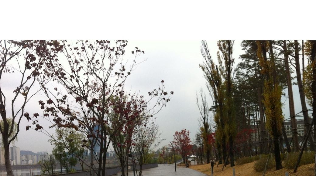 Foto de Jeong Young Woo