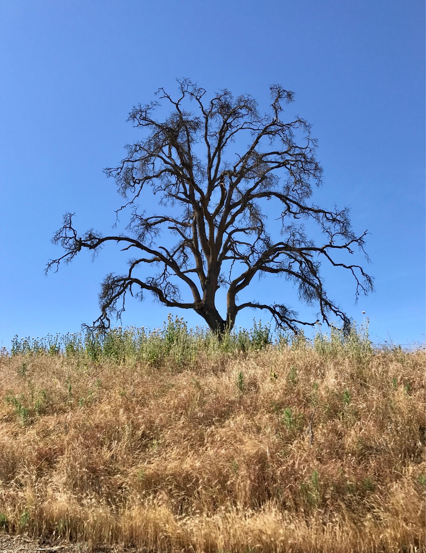 Mokelumne Hill, Californië, Verenigde Staten