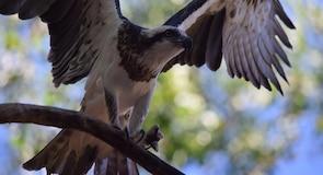 Zoo Territory Wildlife Park