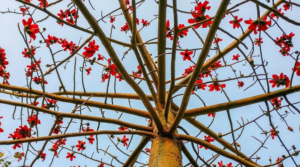 Photo by Mayank Malik
