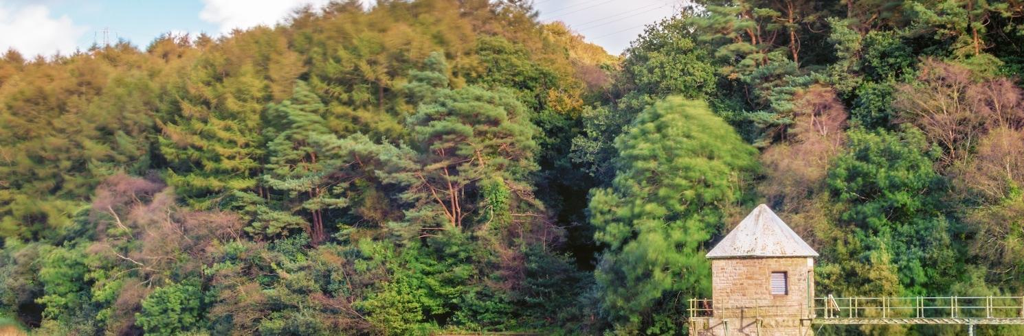Llanelli Rural, 英國