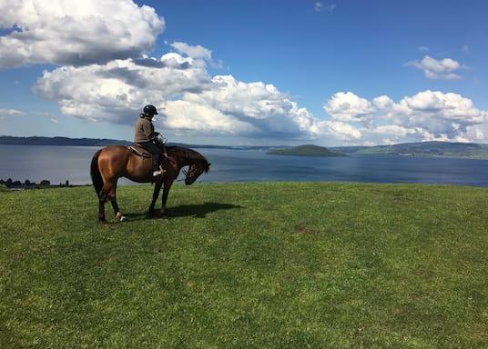 Νγκονγκοτάχα, Νέα Ζηλανδία