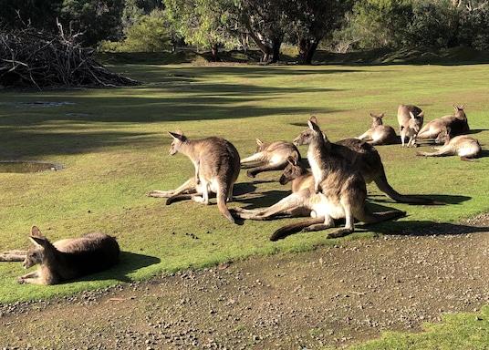 Taranna, Tasmania, Australia