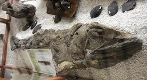 Villa de Leyvan fossiilimuseo