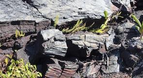Art Hawaïen contemporain Volcano Garden Arts