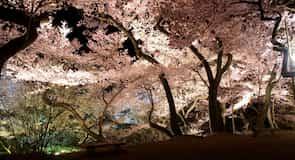 Parque Takato Joshi