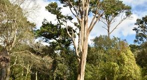 Abbotsbury Sub-Tropical Gardens