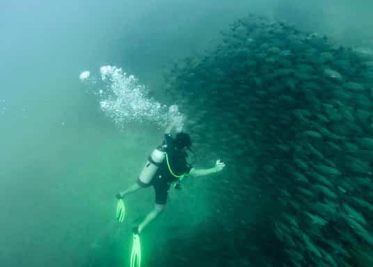 德拉給灣, 哥斯達黎加