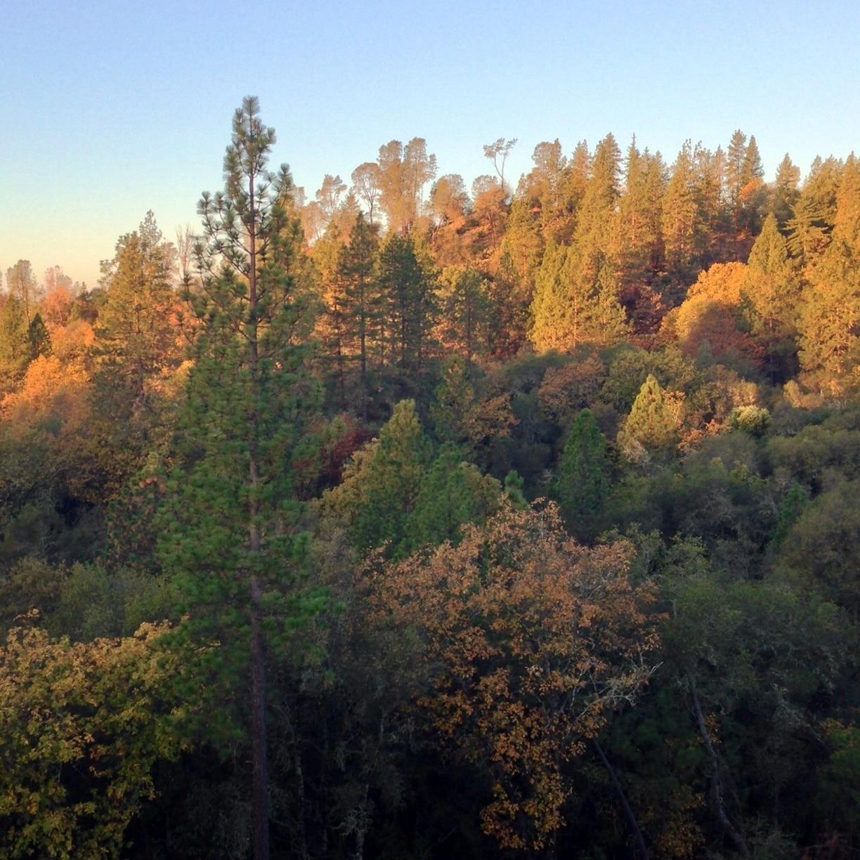 Jackson, CA