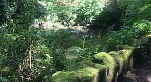 Jesmond Dene Park