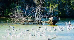 水晶河國家野生動物保護區