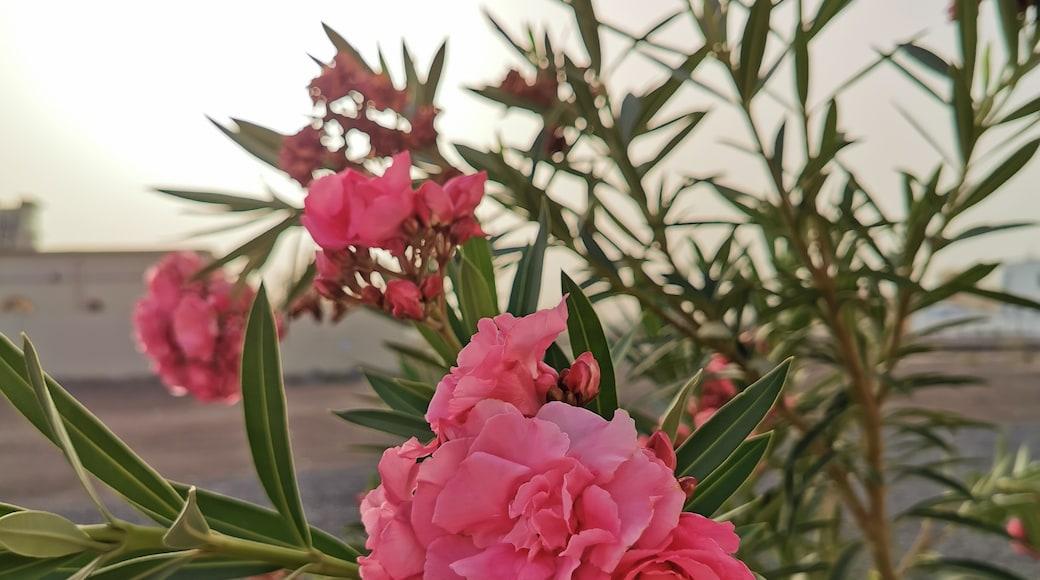 Foto von Bader Almahroqi