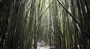 Hana Forest Reserve (哈纳森林保护区)